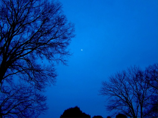 Moonlight: Photography by Rachael